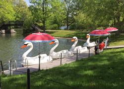 Swan Boat Rides at Roger Williams Park