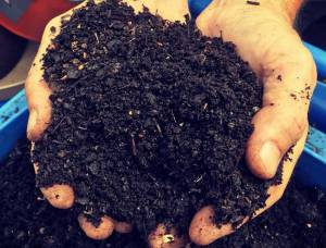 NEW BLOG! Compost, Climate and the City