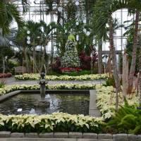 Conservatory Holiday Display