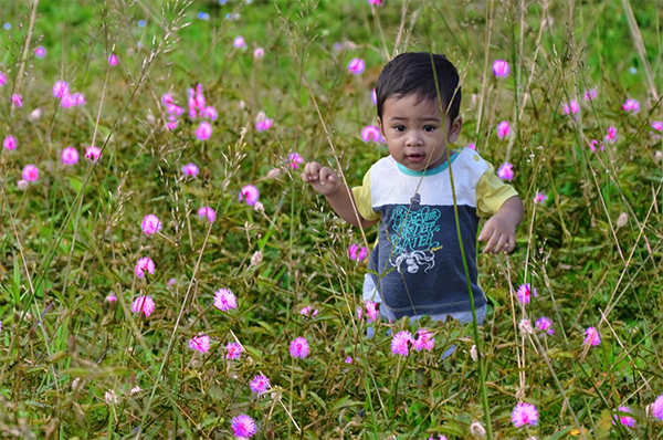 Pesticide Free Children